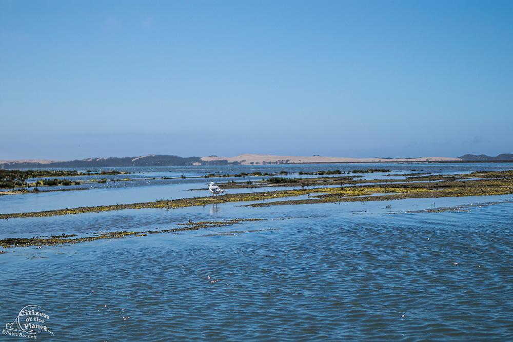 Birds flock in the wetlands around Morro Bay, San Luis Obispo, California, USA