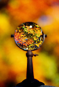 Magnifying glass looking at fall trees
