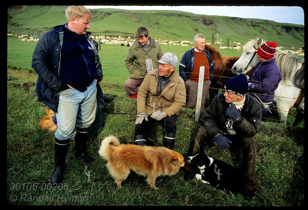 Horsemen relax along fence of mountain corral during fall roundup with dogs and horses; Klaustur. Iceland