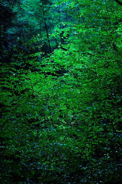 Photo copyright 2009, Matt Roth.Monday, August 10, 2009..Deep Creek!!!