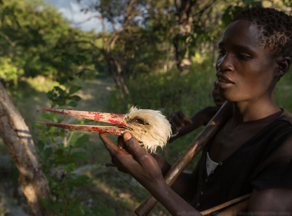 The head of a stoke that has been hunted. At the Hadza camp of Dedauko.