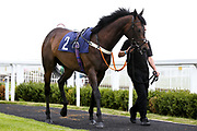 Buy Me Back ridden by Callum Shepherd and trained by Mark Loughnane - Mandatory by-line: Robbie Stephenson/JMP - 18/07/2020 - HORSE RACING- Bath Racecourse - Bath, England - Bath Races 18/07/20