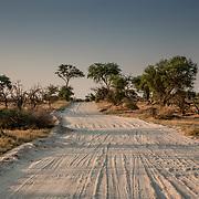 20211003 Maun Botswana <br /> Moremi nationalpark Okavangodeltat<br /> Sand väg <br /> <br /> <br /> ----<br /> FOTO : JOACHIM NYWALL KOD 0708840825_1<br /> COPYRIGHT JOACHIM NYWALL<br /> <br /> ***BETALBILD***<br /> Redovisas till <br /> NYWALL MEDIA AB<br /> Strandgatan 30<br /> 461 31 Trollhättan<br /> Prislista enl BLF , om inget annat avtalas.