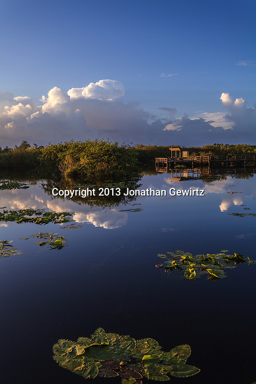 Morning at Taylor Slough on the Anhinga Trail in Everglades National Park, Florida. <br /> <br /> WATERMARKS WILL NOT APPEAR ON PRINTS OR LICENSED IMAGES.<br /> <br /> Licensing: https://tandemstock.com/assets/46491279