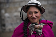 Indian woman Marta Tacuri<br /> Pulingue San Pablo community<br /> Chimborazo Province<br /> Andes<br /> ECUADOR, South America