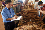 09 APRIL 2010 - DON NANG HANG, NAKHON PHANOM, THAILAND: A manager grades tobacco in the warehouse. Thai tobacco farmers have their crop graded and priced before they sell it at the Thai government tobacco warehouse in Don Nang Hang village in Nakhon Phanom province. The region, in northeast Thailand, is the center of the Thai tobacco industry.  PHOTO BY JACK KURTZ