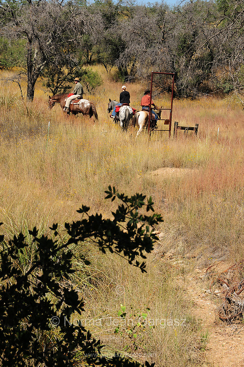 Kentucky Camp, a ghost town in the Coronado National Forest, once served miners near Sonoita, Arizona, USA.  Riders from Arizona Horse Experience ride on horseback through camp on the Arizona Trail.