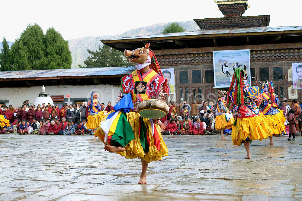 Monks performing a mask dance at the Black-necked Crane festival at Gangte Goemba, Phobjikha Valley, Bhutan. Every year on November 11th, the local community hosts the Black-necked Crane festival at Gangte Goemba, to highlight its significance to the valley. Phobjikha Valley is the most significant overwintering ground of the rare and endangered Black-necked Crane in Bhutan.