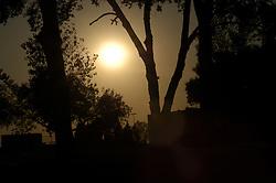 Sun shining through tree silhouette