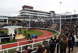 Horses are led around the parade ring prior to the Ballymore Novices' Hurdle at Cheltenham Racecourse