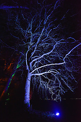 © Licensed to London News Pictures. 11/12/2015. WESTONBIRT ARBORETUM, GLOUCESTERSHIRE. Westonbirt Arboretum is illuminated at night as part of the Enchanted Christmas event. Photo credit : MARK HEMSWORTH/LNP