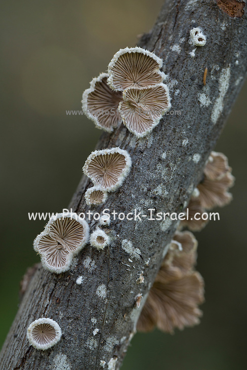Fungui growing on a tree trunk Photographed in Israel in December
