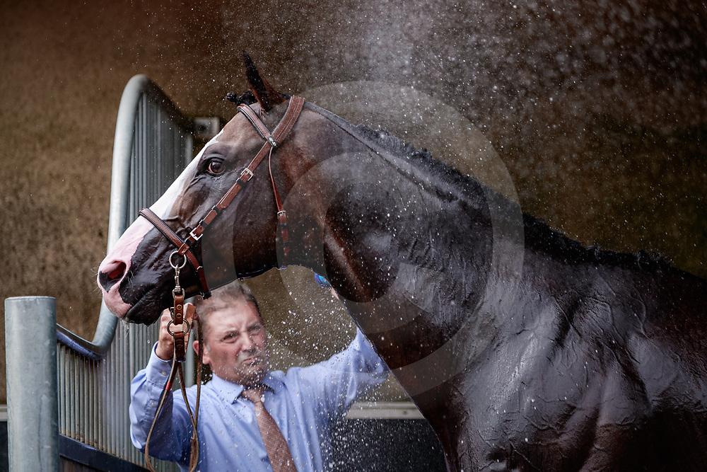 Talismanic showered after winning Prix Gontaut-Biron Hong Kong Jockey Club Gr.3 in Deauville, France  15/08/2018, photo: Zuzanna Lupa