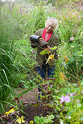Taking root cuttings from pot grown Acanthus mollis 'Hollard's Gold'. Carol Klein planting out Acanthus mollis 'Hollard's Gold'