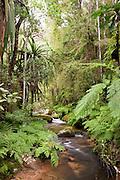 A river flowing through the jungle of Andasibe-Mantadia National Park, Madagascar