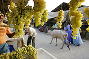 Grapes for sale at the Ujjain municipal market. (Supporting image from the project Hungry Planet: What the World Eats.) Grocery stores, supermarkets, and hyper and megamarkets all have their roots in village market areas where farmers and vendors would converge once or twice a week to sell their produce and goods. In farming communities, just about everyone had something to trade or sell. Small markets are still the lifeblood of communities in the developing world.