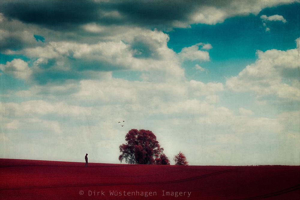 Minimalistic rural landscape