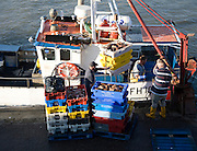 Fishing harbour unloaded fresh catch Bridlington, Yorkshire, England