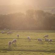 Last light, Millom Marsh, Cumbria.