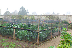 The brassica bed at Rousham House protected with netting cage