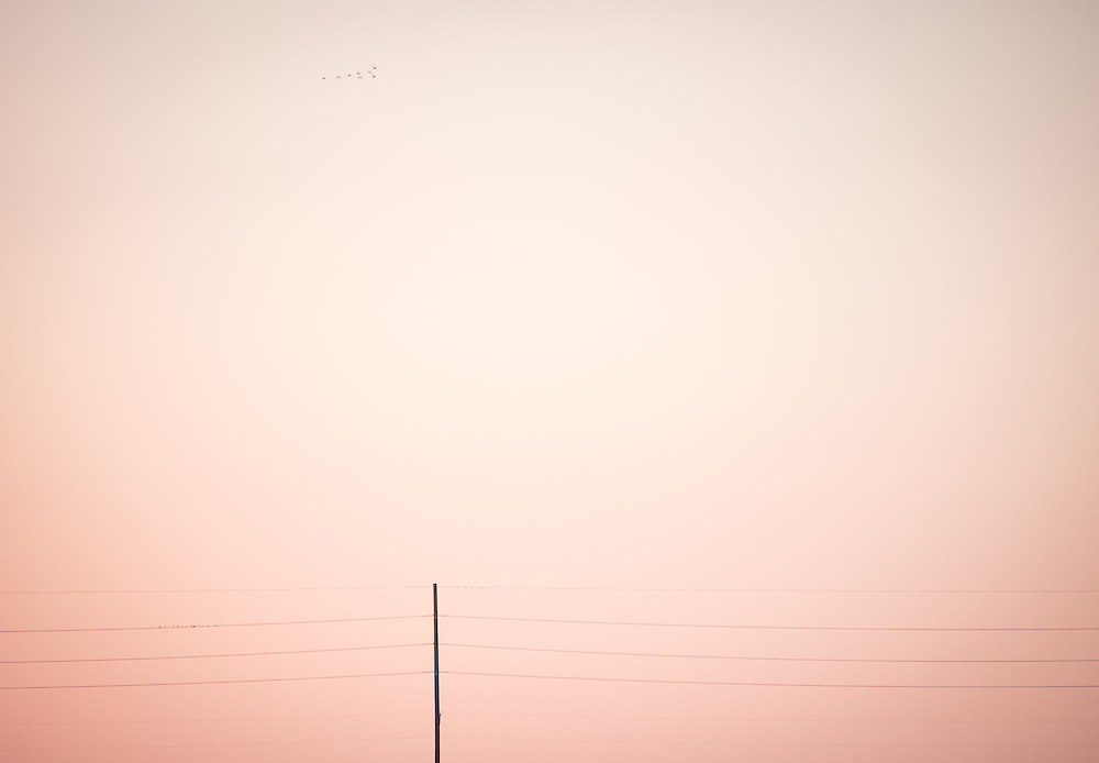 Late afternoon light glows on on a powerline and passing birds south of Wichita.