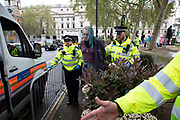 Climate change activist from the Extinction Rebellion group is arrested for trying to tie a bag to a rope to pass tools up to protesters in the trees above at Parliament Square in protest that the government is not doing enough to avoid catastrophic climate change and to demand the government take radical action to save the planet, on 24th April 2019 in London, England, United Kingdom. Extinction Rebellion is a climate change group started in 2018 and has gained a huge following of people committed to peaceful protests.