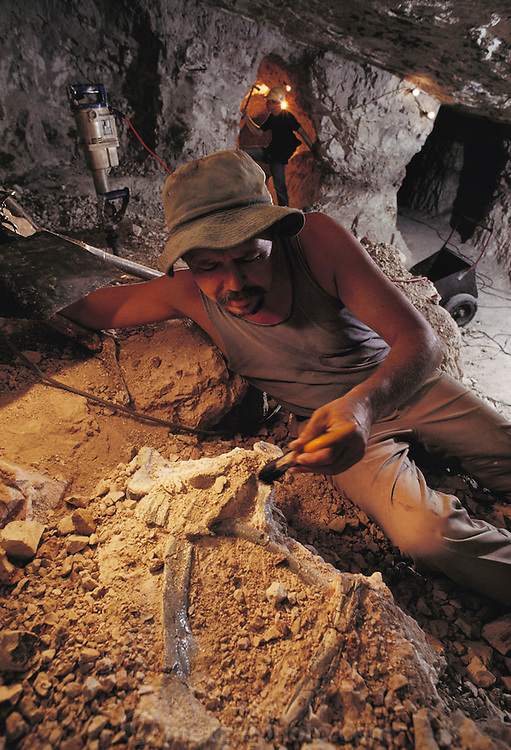 """Hunting for fossils: Mine owner Bob Foster displays fossil dinosaur remains found in an opal mine at """"he Sheepyards"""" mine area of Lightning Ridge, southern Australia. Fossil excavations usually follow existing mining operations. The seam of opal-bearing rock is about 100-120 million years old, laid down during the mid-Cretaceous Period, a time of rich diversification of dinosaur species. Australian fossils are particularly interesting, as at that time the continent was much closer to the South Pole than today. This means that many dinosaurs would have had to cope with long periods of permanent darkness during the winter months. MODEL RELEASED [1989]."""