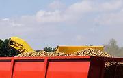 Nederland, Groesbeek, 5-8-2019Een loonbedrijf oogst met een grote machine aardappelen van een veld met verdroogde grond. Werken in een stofwolk . Door het droge weer zijn de knollen kleiner als normaal.Foto: Flip Franssen
