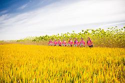 October 10, 2018 - Rugao, Rugao, China - Rugao,CHINA-A special 'fashion show' can be seen at rice fields in Nantong, east China's Jiangsu Province. (Credit Image: © SIPA Asia via ZUMA Wire)