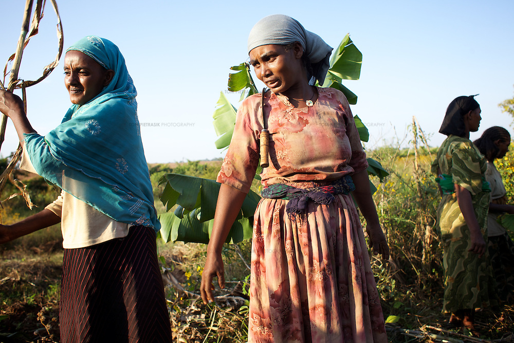 Bayush (centre) with members of a farming cooperative prepare their land for irrigation in the village of Amba Sebat...Bayush Kassan (age 37) lives in the village of Amba Sebat, 20km from the town of Assosa with her daughter Genet (age 14) and son Destaw (age 11) in a small thatched hut without running water or electricity. Bayush is part of a cooperative of 31 women who collectively own land on which they farm vegetables. She grows sesame and other oil-seeds and her village cooperative is part of the Assosa Farmers Multipurpose Cooperative Union. The Union buy's Bayush's seed for almost double the average price paid to her by private traders. ..Growing oil seeds presents challenges for the famers of Assosa in western Ethiopia. Many of the most vulnerable are forced to sell to when they cannot be guaranteed a good price for their product. Farms are often located in isolated areas which entails huge amounts of time and effort simply getting seeds to market. Many farmers do not have the resources to properly invest in their land and are tied into exploitative loan arrangements with brokers that deny them the chance to take proper control of their farms. And, as with other agricultural products, it is those agents that process the seeds into oil that secure the greatest profit, very little of which trickles down to benefit the farmer...In response to these pressures, twenty farming cooperatives have formed the Assosa Farmers Multipurpose Cooperative Union. By working together, individual farmers are able to pool their resources and squeeze out exploitative agents and brokers. The Union has sufficient capital that it can afford to wait for prices to reach a level at which it is profitable to sell seeds to market. The Union provides loans to constituent members together with training and advice to help farmers make better use of their land. And by collectively hiring vehicles through the Union, farmers need not spend so much time ferrying their produce to market. ..All t