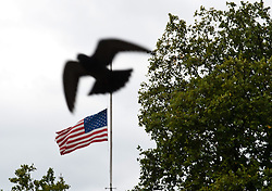 Sept. 11, 2013 - United Kingdom - EDL  - 9/11 memorial in London. .A bird flies in front of the half-mast american flag at the US Embassy on the anniversary of the Twin Towers attacks in London, United Kingdom. Wednesday, 11th September 2013. Picture by Piero Cruciatti / i-Images (Credit Image: © Piero Cruciatti/i-Images/ZUMAPRESS.com)