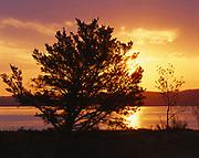 Jackpine silhouetted by sun rising over Sleeping Bear Bay of Lake Michigan, Sleeping Bear Dunes National Lakeshore, Michigan.