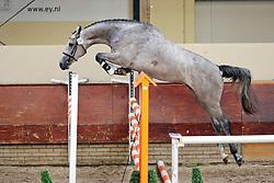Baomi<br /> KWPN Paardendagen 2009<br /> © Hippo Foto - Leanjo de Koster