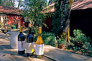 Wine bottles with jug under the shadow of a tree at daytime