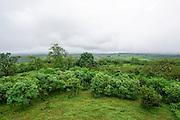 Green Landscape Photographed in the Galapagos Island, Ecuador
