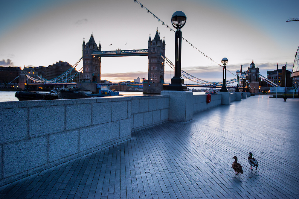 Two ducks walk alone on the riverwalk near City Hall and Tower Bridge on an early morning in London