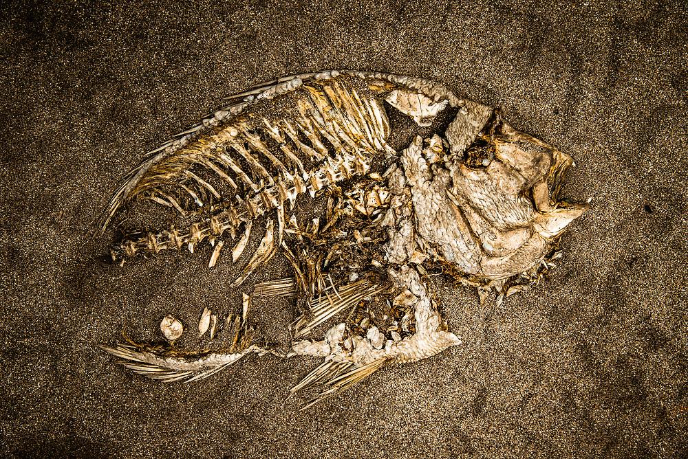 Fish Skeleton at the beach near Cape Leeuwin, Western Australia