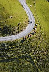 THEMENBILD - Radfahrer auf einem Forstweg mit einer Herde Kühe, aufgenommen am 01. Juni 2020 in Kaprun, Österreich // Cyclist on a forest road with a herd of cows, Kaprun, Austria on 2020/06/01. EXPA Pictures © 2020, PhotoCredit: EXPA/ JFK