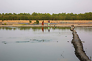 Fish jumping across the water at a fish farm on the 2nd of October 2018 in Satkhira District, Bangladesh. Satkhira is a district in southwestern Bangladesh and is part of Khulna Division. It's main contributors to the economy are shrimp, fish and paddy farming. It is on the bank of the Arpangachhia River.