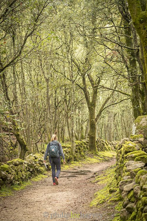 Woman walking on path between trees, Cuccuruzzu, Corsica, France