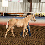 20-J025-Nile Horse Sale Preview