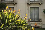Casas en El Golf y ave del paraíso / Santiago de Chile.<br /> <br /> Edición de 3 | Víctor Santamaría.