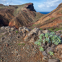 """According to """"Wikitravel"""" - Hiking at Ponta de São Lourenço, the eastern part of Madeira is a nature reserve with wonderful panoramic views of the Atlantic and spectacular volcanic rock formations. Many unusual species of plants are found here and are best seen from the footpath, such as the Ice Plant, Everlasting, Cardoon and many more. The hiking trail, which in recent years has been upgraded with stone steps and safety railings, can be walked comfortably with a pair of good hiking boots. The full walk, including a curcuit of the reserve at the far end, will take several hours, so carry food and drink."""