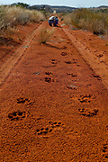 Tswalu Kalahari Reserve, the Oppenheimer family-owned reserve near the very small town of Vanzylsrus. Lion tracks