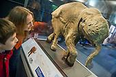 Lyuba, Baby Mammoth Natural History Museum