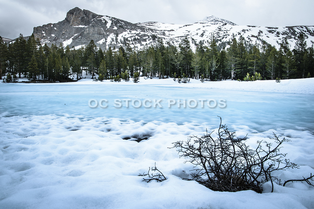 Winter in Tuolumne Meadows at Yosemite National Park