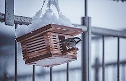 THEMENBILD - eine Kohlmeise (Parus major) sitzt auf einem Vogelhaus, aufgenommen am 13. November 2019, Piesendorf, Österreich // a great tit (Parus major) sits on a birdhouse on 2019/11/13, Piesendorf, Austria. EXPA Pictures © 2019, PhotoCredit: EXPA/ Stefanie Oberhauser