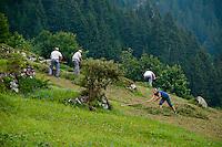 Harvesting the steep mountain fields by hand in Golzern, Switzerland.