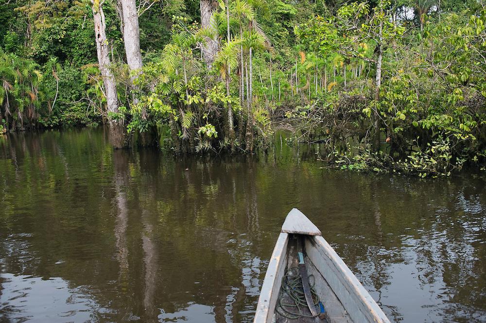 Canoe moving through flooded Igapo forest.<br /> Cocaya River. Eastern Amazon Rain Forest. Border of PERU &ECUADOR. South America