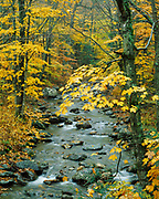 Autumn colors of beech-maple forest along White River, Green Mountain National Forest, Vermont.